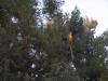 Israel, parrots