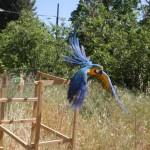 macaw free fligth