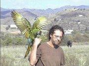 Aves de Manue