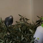 Купание попугая